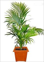 Пальмы в горшке