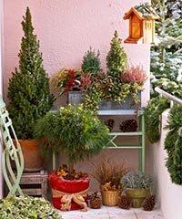 Озеленение балкона зимой