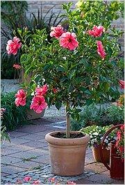 Красивые большие домашние цветы фото