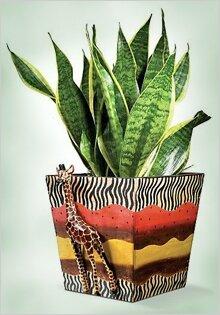 комнатные растения фото вызывающие аллергию