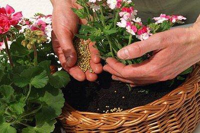 Подкормка домашних цветов