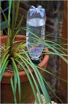 купить шар для полива комнатных растений