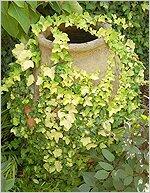 Растения очищают воздух