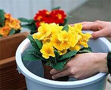 Как поливать домашние растения