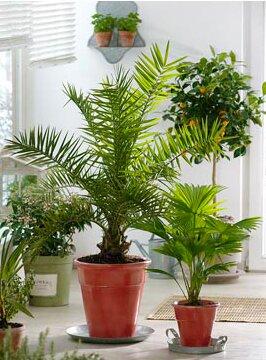Горшки для домашних растений
