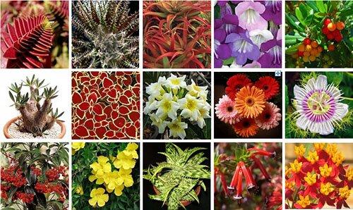 Заказ почтой домашних цветов доставка цветов в городе кременчуг