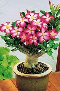 Купить комнатные цветы семена комнатных цветов подарок женщине 400р