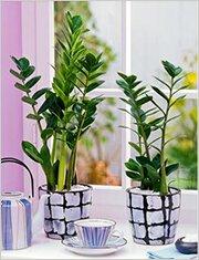 Комнатные растения для северного окна