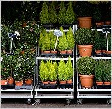 Как купить комнатное растение