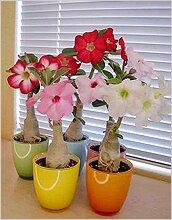 Комнатные цветы для южных окон