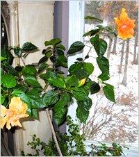 Теплолюбивые комнатные растения