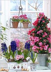 Цветущие зимой комнатные растения