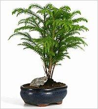 Полезные для здоровья комнатные растения