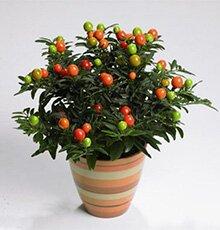 Огромная коллекция самые редкие растения
