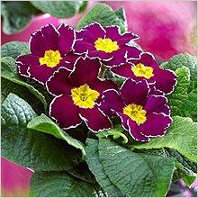Комнатные растения фото с названиями Фотографии