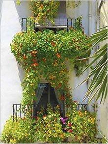 Настурция для балконов