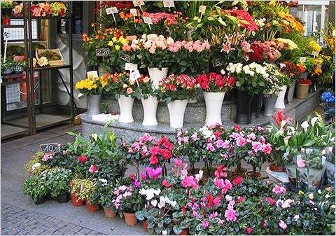 Как выбирать домашние цветы в